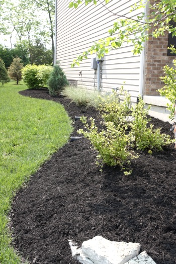A Quick Landscape Improvement